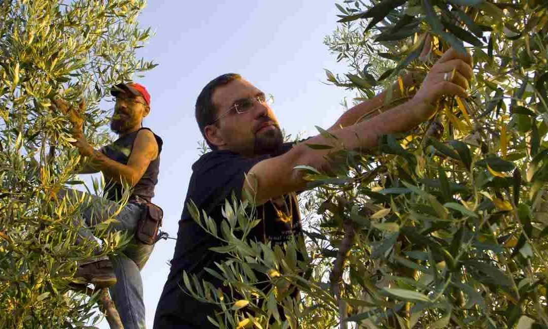 Pomodori e olive liberi dalle mafie